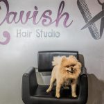 Romeo Salon Dog Lavish Hair Studio Pittsburgh Hair Salon